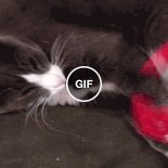 Pensa num gato que é abusado…