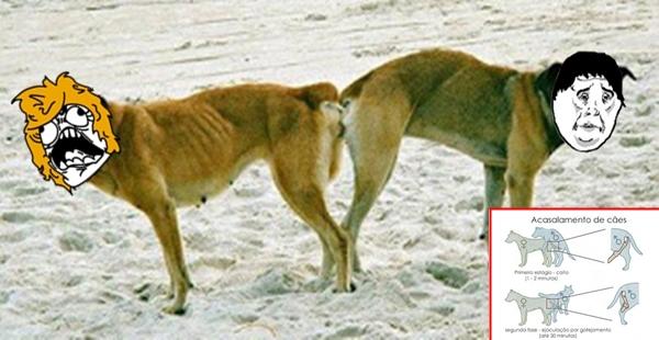 Por que os cachorros ficam agarrados na hora do acasalamento?