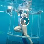 Tubarão ataca atriz batedora de coxa, dentro de gaiola na Flórida