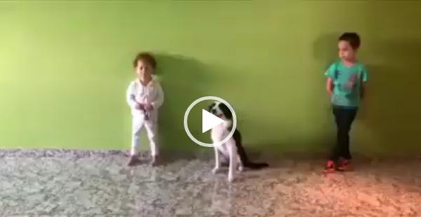 O melhor vídeo solta a pisadinha, que você verá hoje