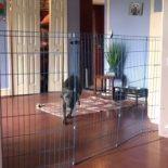 O mistério da barreira que o dog não consegue atravessar!